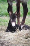 2nd 2014 foal pic 2