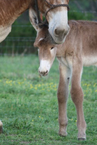 4th foal of 2014